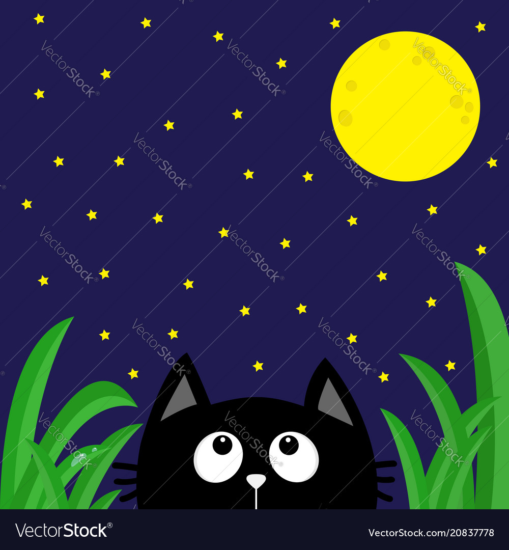 Black cat looking stars and moon in the dark