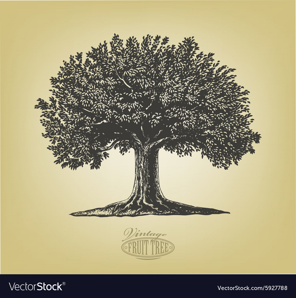 Tree in engraving style