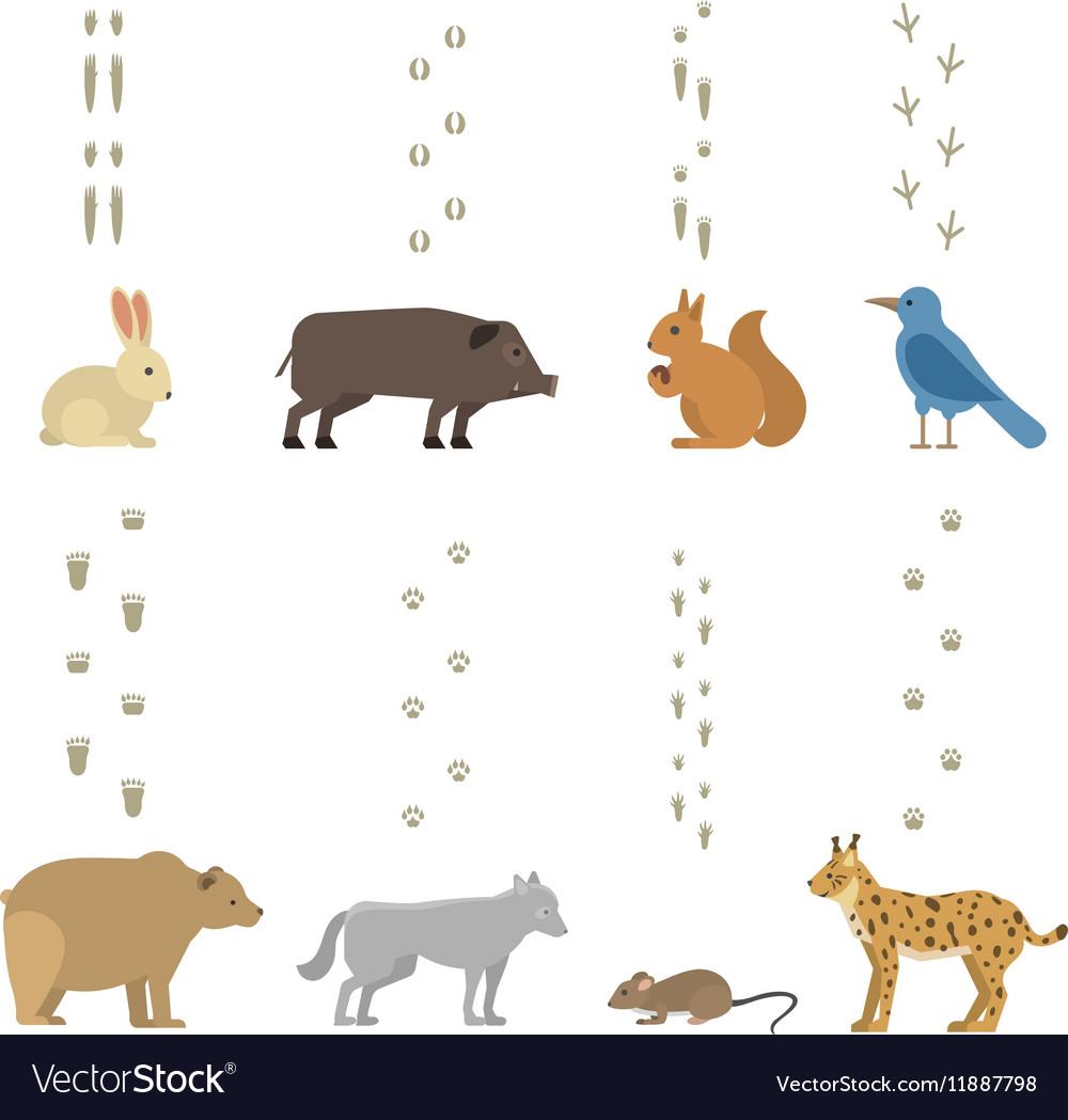 Animals steps set