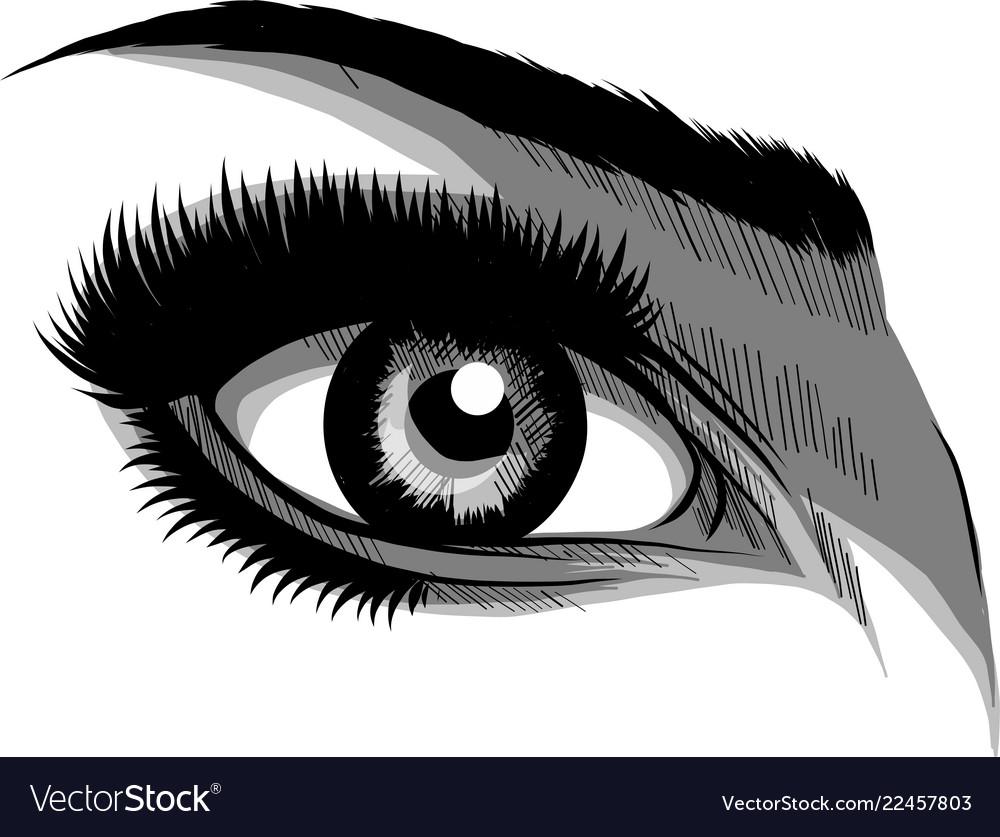Beautiful women eyes with make