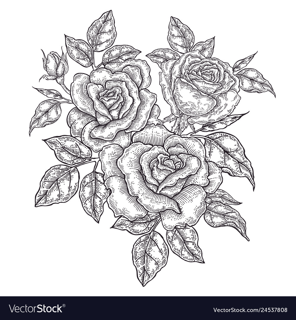 Hand drawn rose flowers and leaves vintage floral