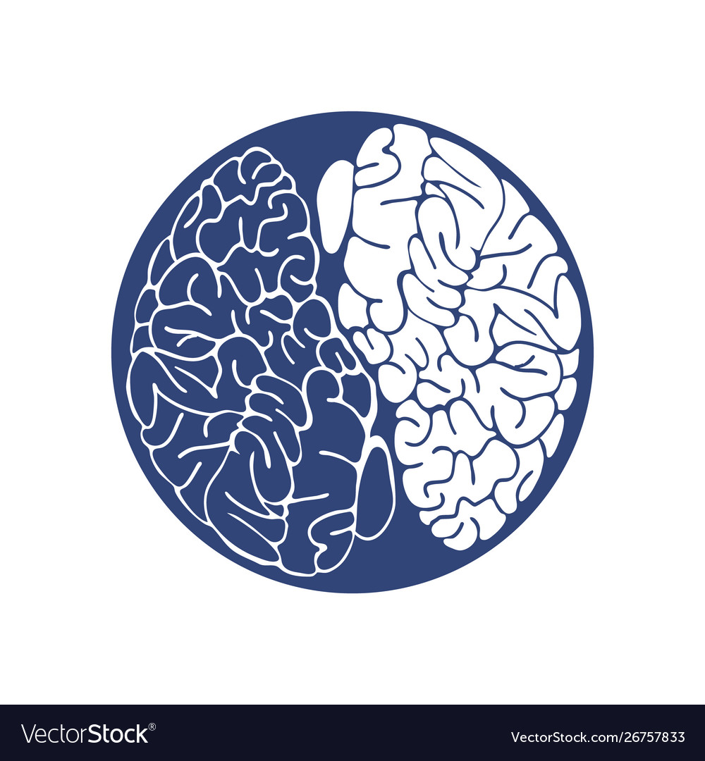 Sketch ink human brain hand drawn anatomical