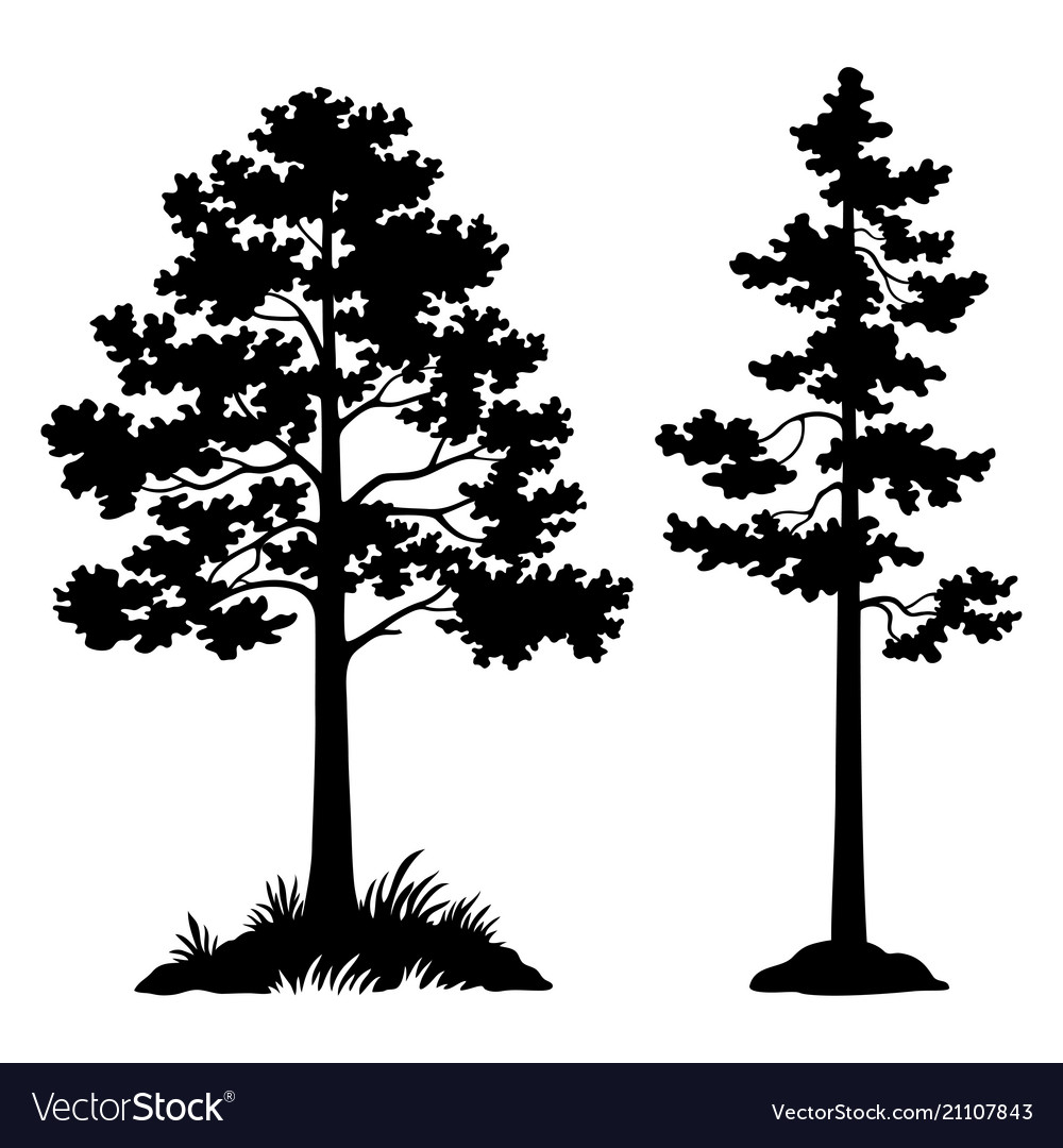 Pine Trees Black Silhouette Royalty Free Vector Image
