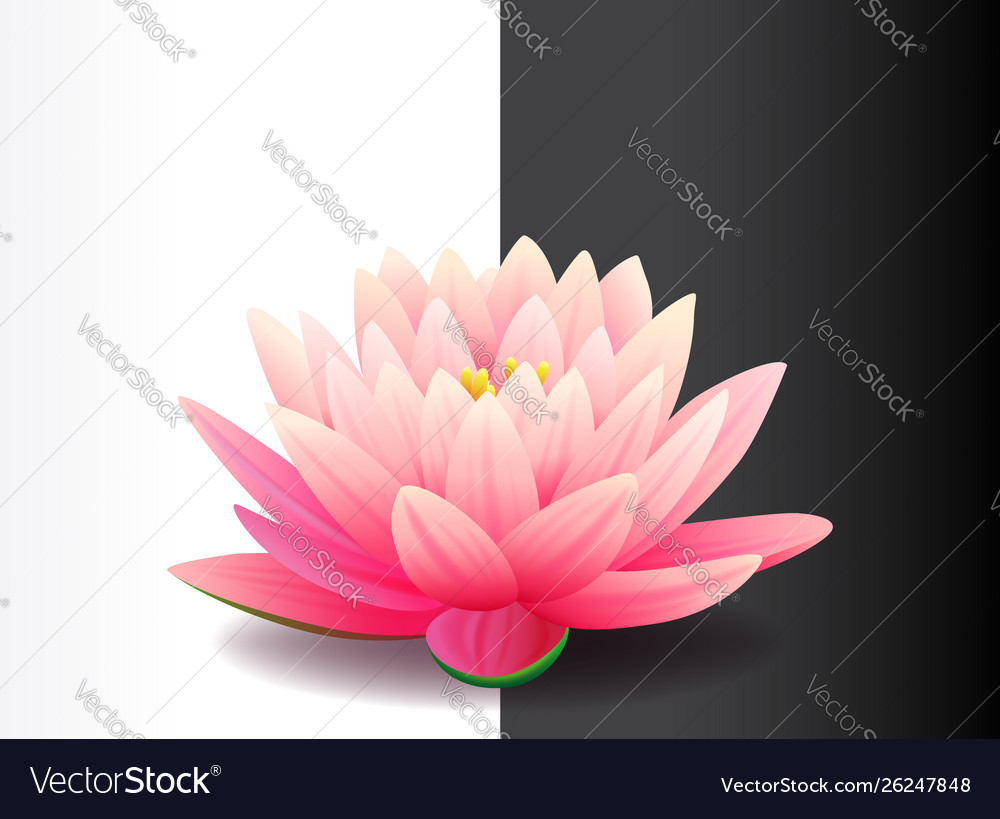 Beautiful realistic pink lotus flower isolated on