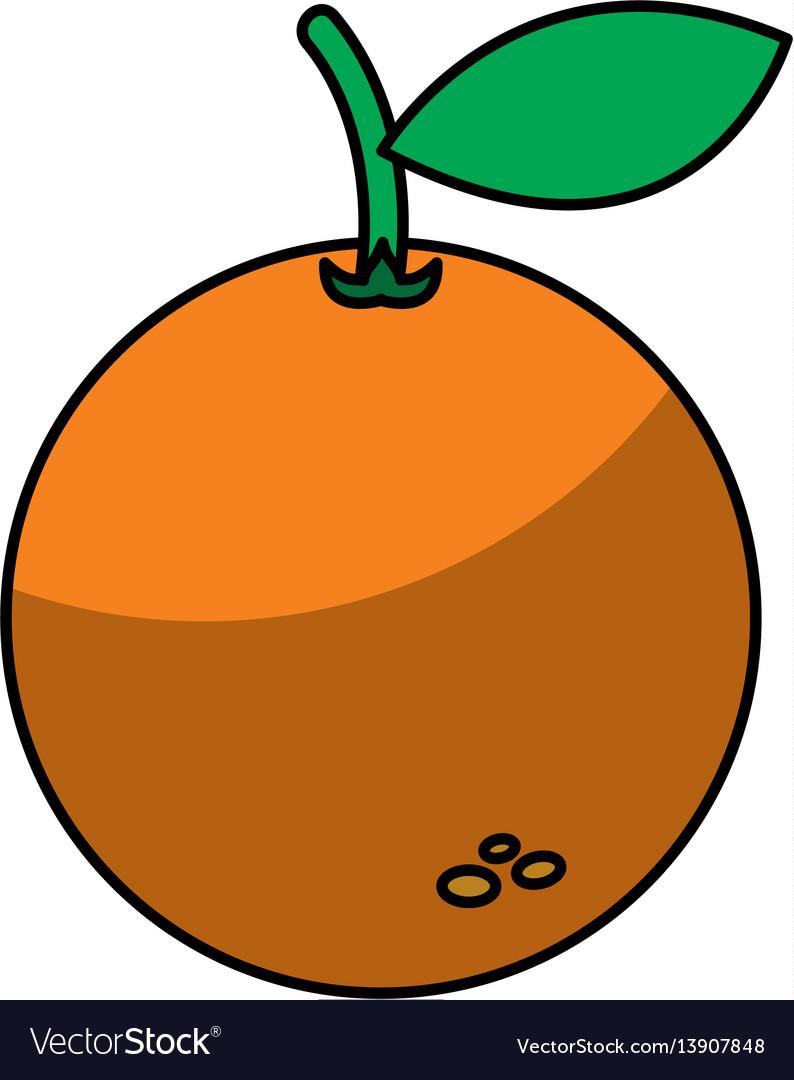 Orange fruit isolated icon