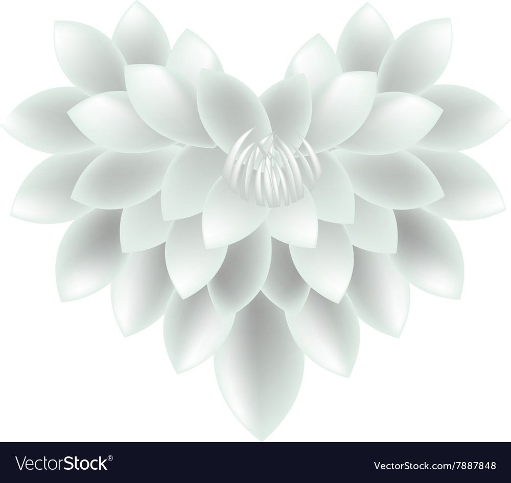 White dahlia flowers in a heart shape royalty free vector white dahlia flowers in a heart shape vector image izmirmasajfo