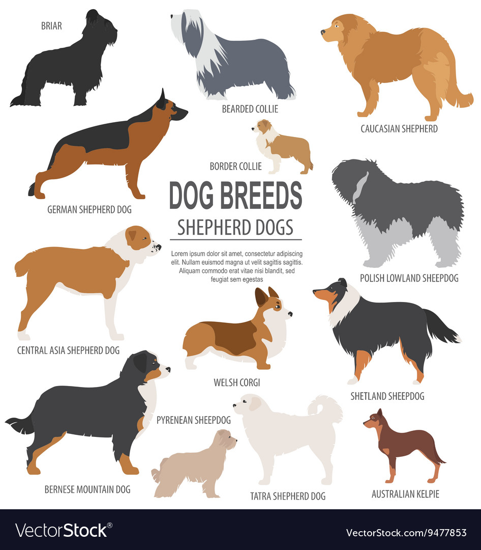 Shepherd dogs: a selection of sites