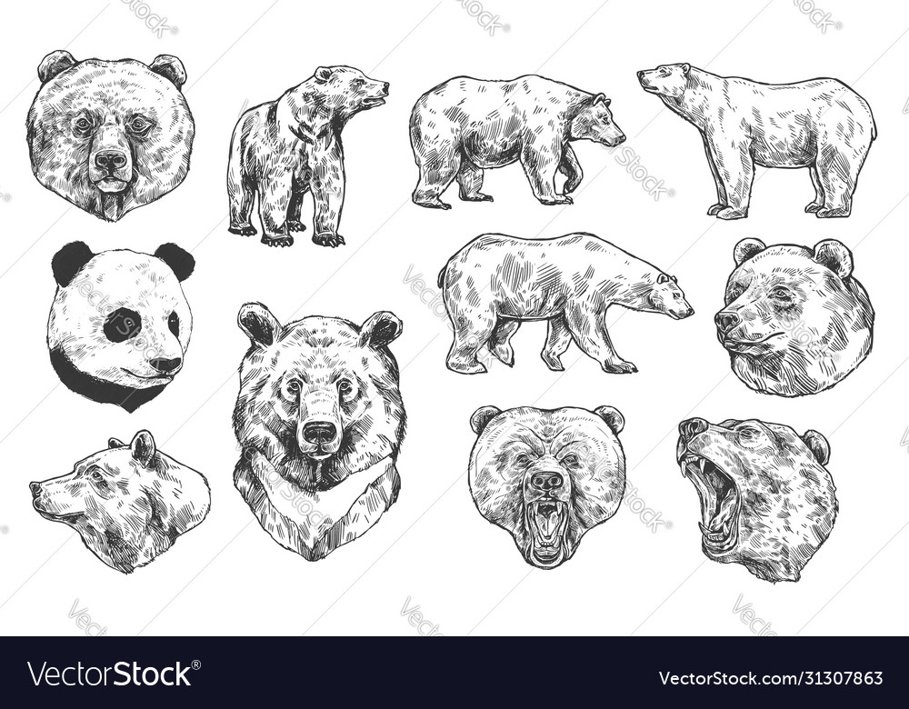 Bear grizzly and panda sketches