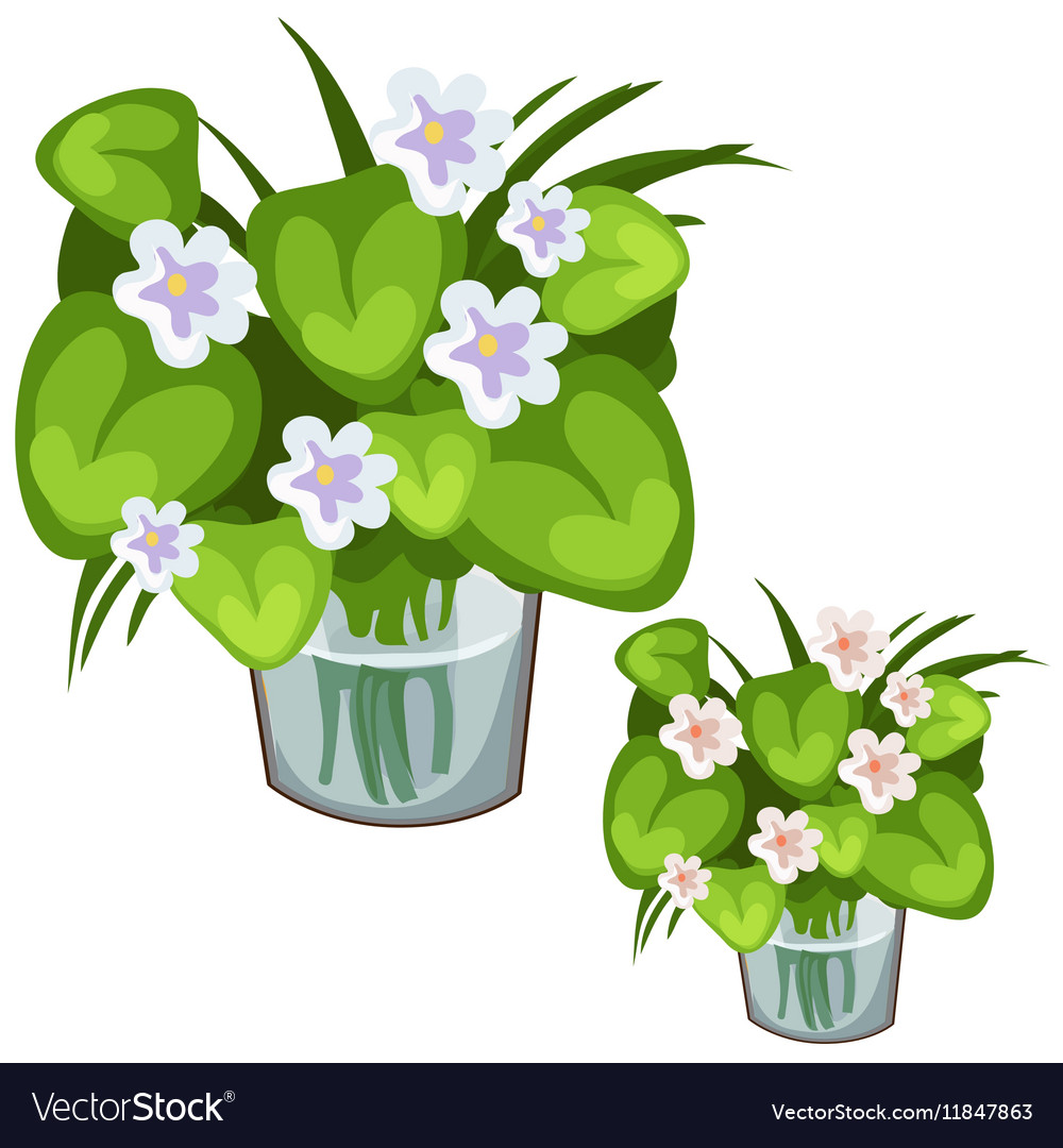 White Flowers With Green Leaves In Glass Vase Vector Image