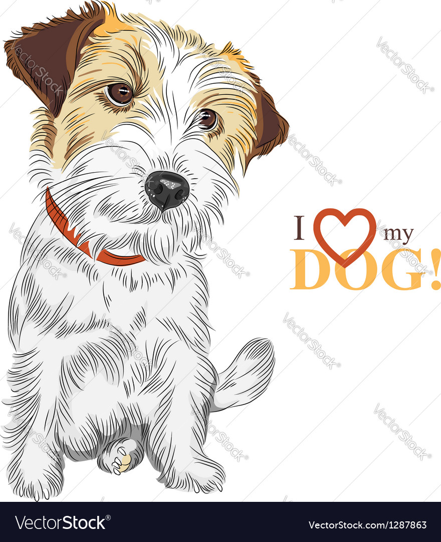 Wire-haired dog Jack Russell Terrier Royalty Free Vector
