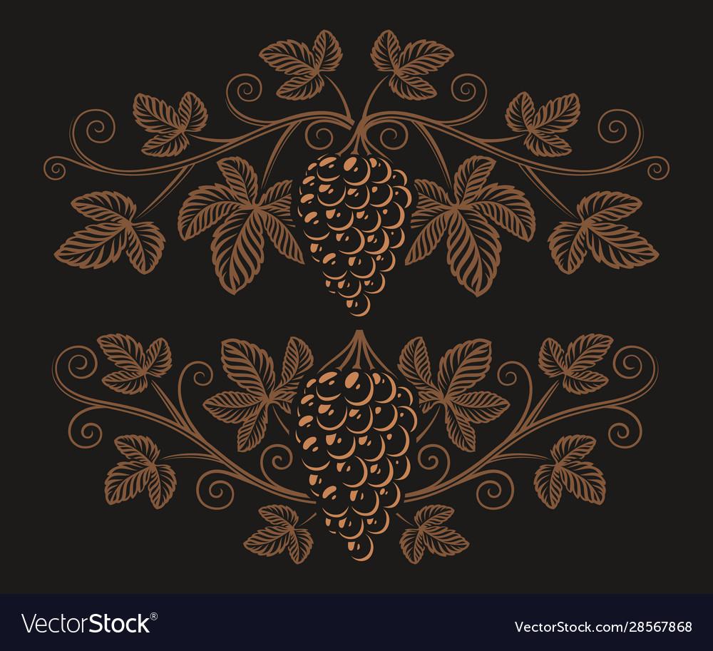 Vintage a grape branch