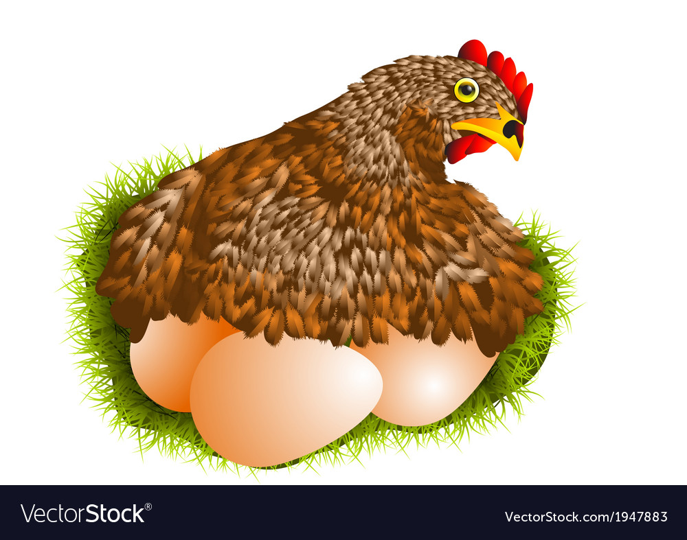 Red hen with eggs vector image