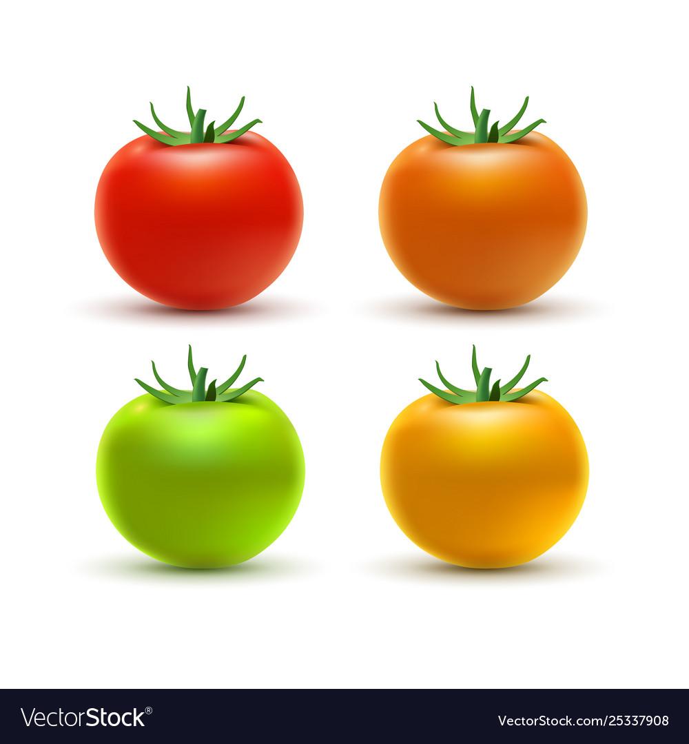 Tomato colorful isolated on white tomato organic