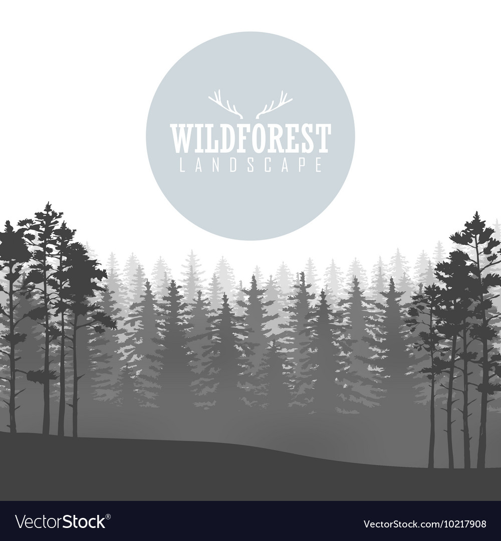 Wild coniferous forest background Pine tree