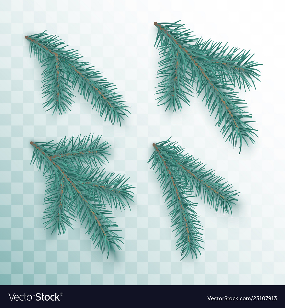 Conifer branches set green branches of a