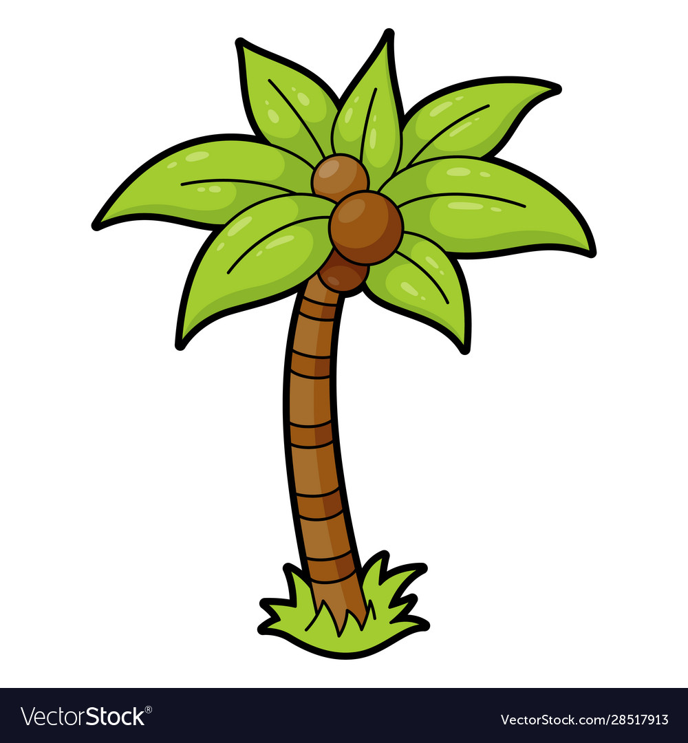 Palm tree icon evergreen tree tropical warm