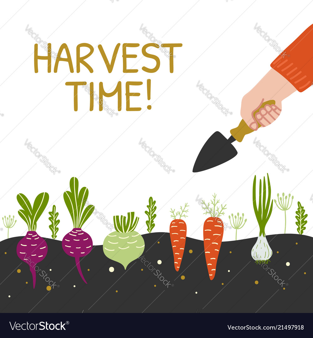 Harvest time bright banner man is harvesting in a