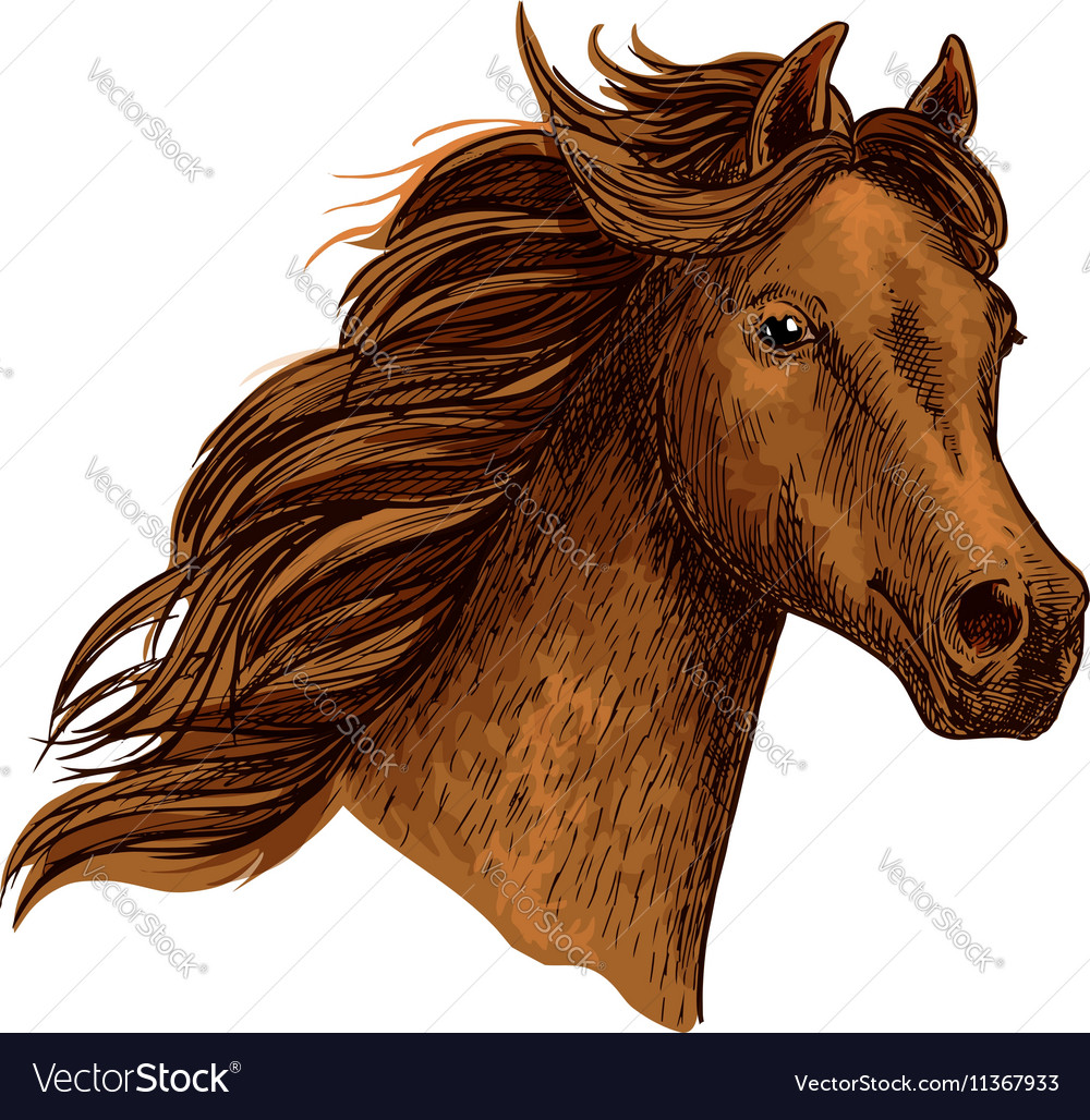 Fashion style Horse Arabian head pictures for woman