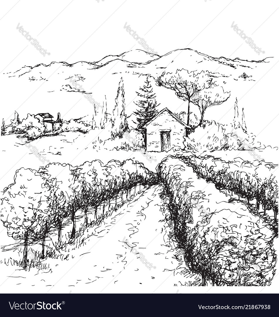 Rural scene with houses vineyard and hills sketch