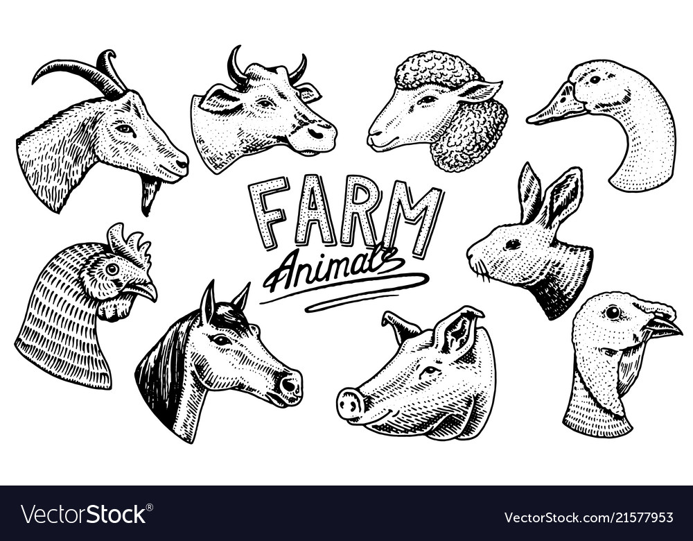 Farm animals head of a domestic horse pig goat