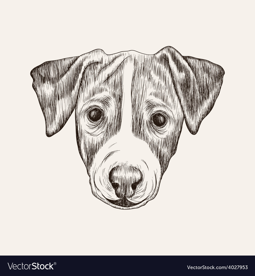 Sketch Jack Russell Terrier Dog Hand Drawn Face