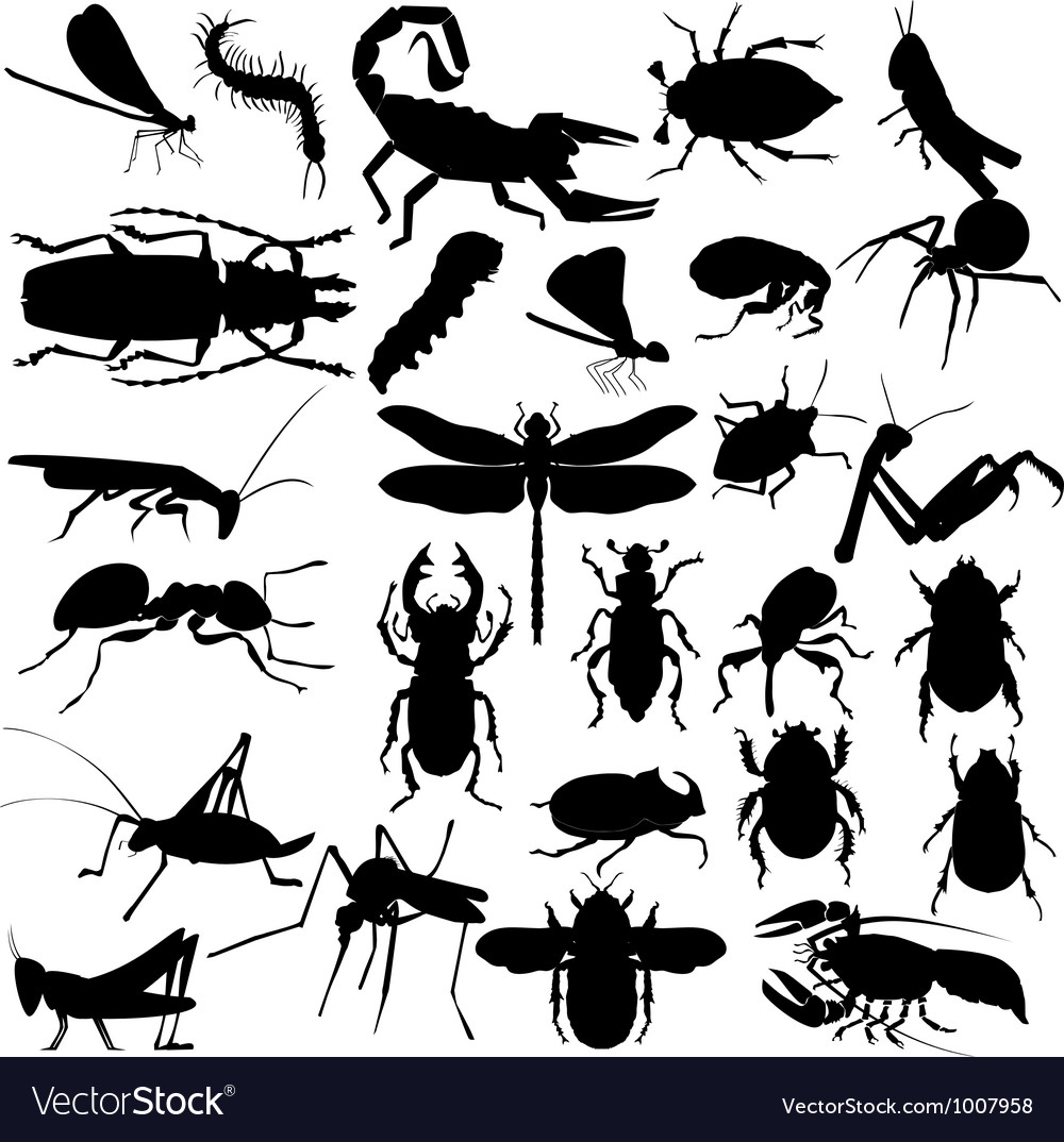 Silhouettes of insects vector image