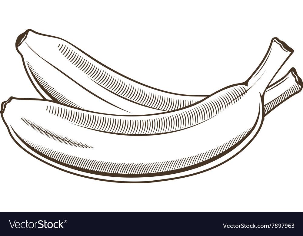 Bananas in vintage style Line art