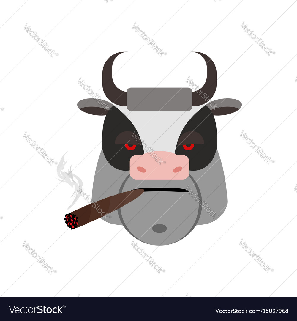 Angry bull with cigar ferocious muzzle cow evil