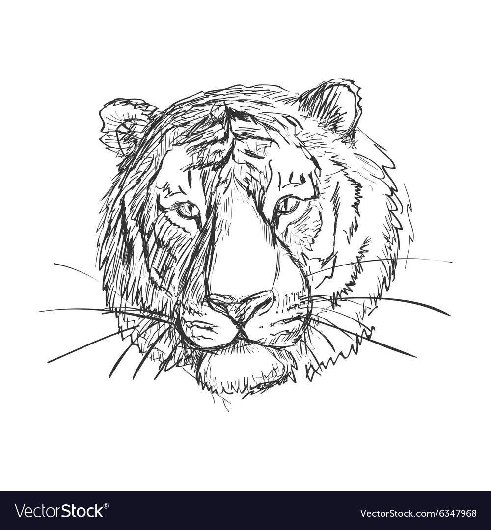 Sketchy doodle tiger vector image