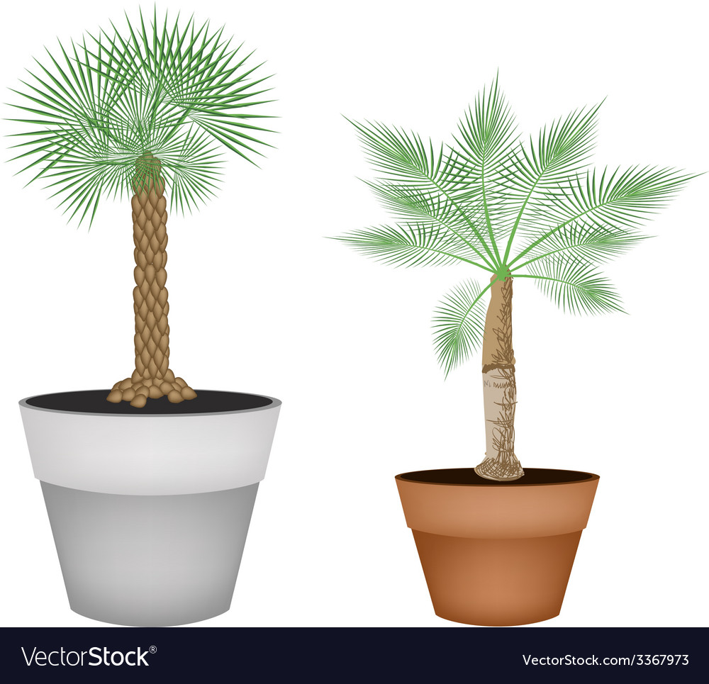 Two Isometric Palm Trees in Terracotta Pots vector image