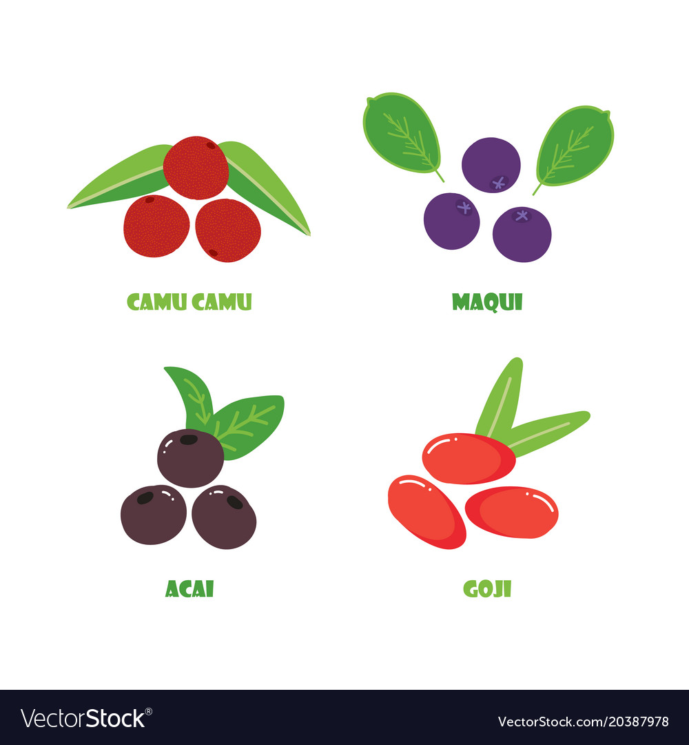 Camu Camu Maqui Acai And Goji Berries Royalty Free Vector