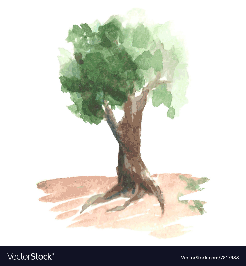 Romantic watercolor tree with green foliage on vector image