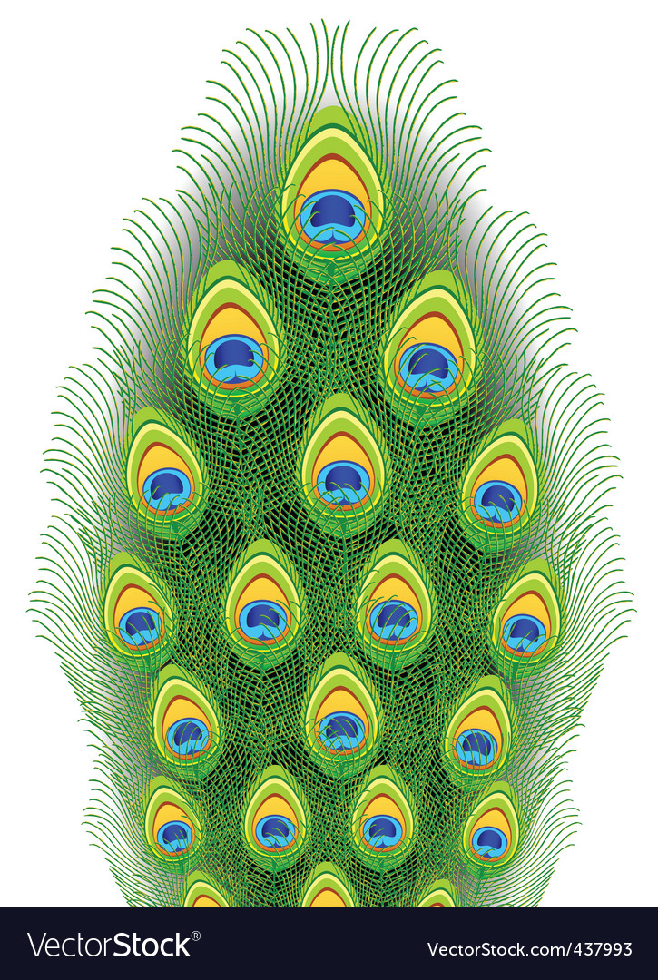 Peacock feathers illustration