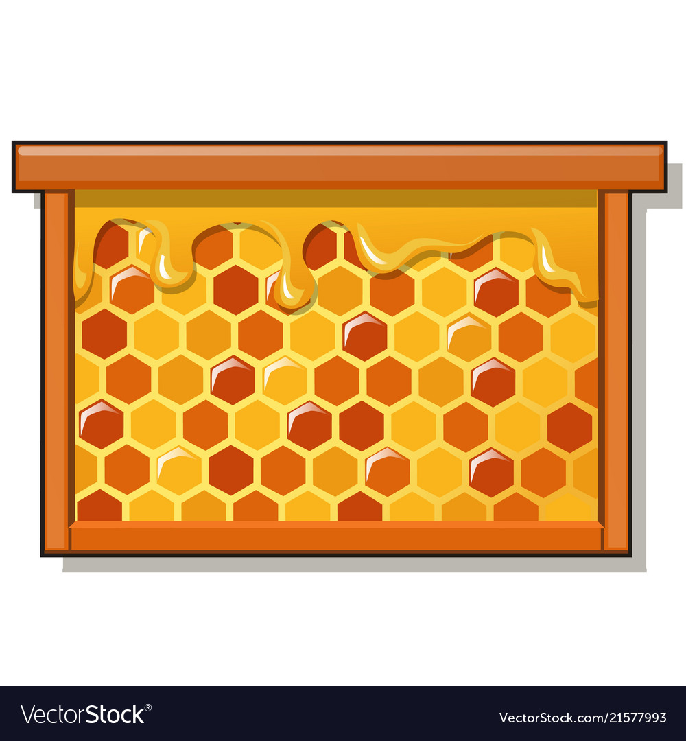 Wooden frame with sweet golden honeycomb with