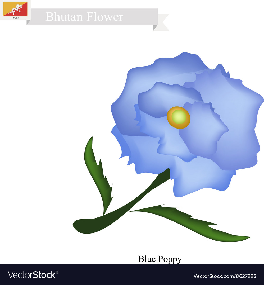 Blue Poppies The National Flower of Bhutan vector image