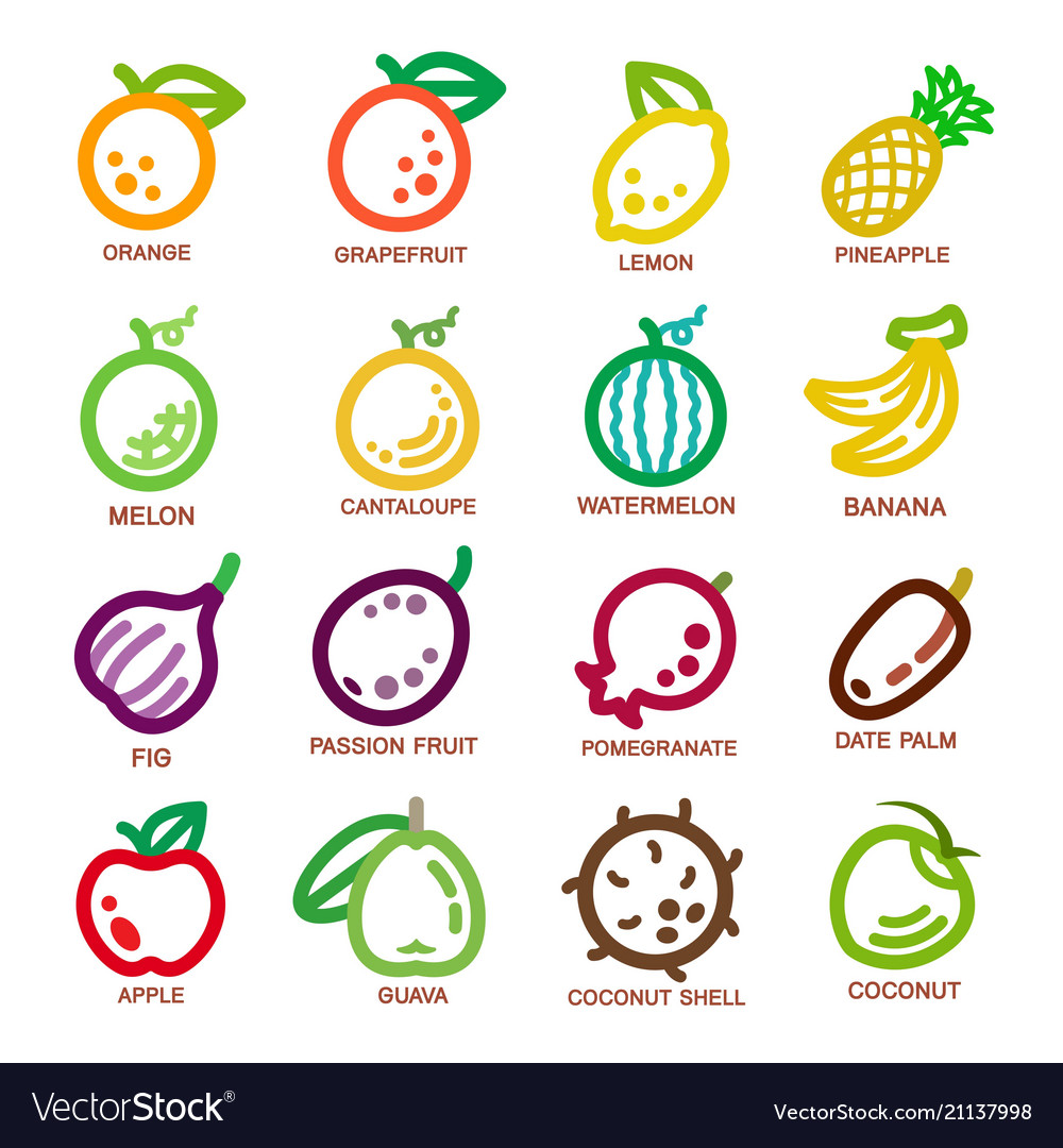 Fruit thin line icon vector