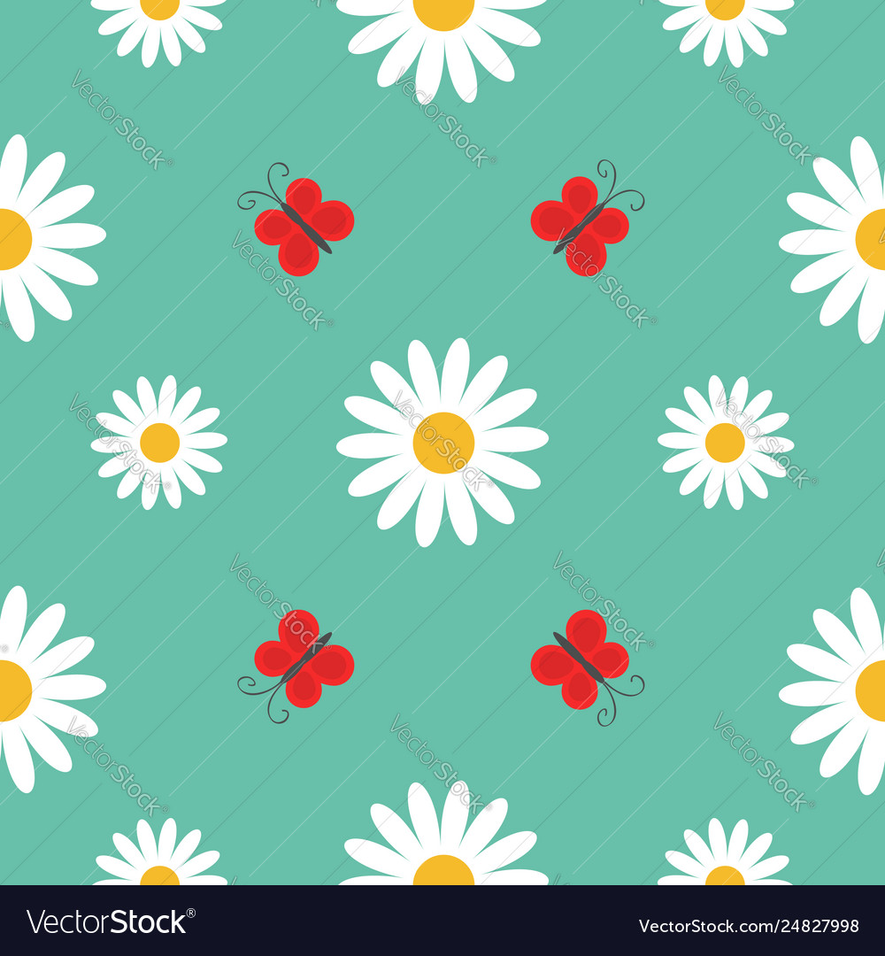 Red butterfly insect white daisy chamomile cute