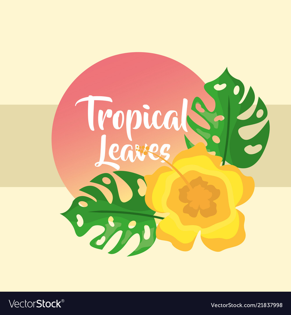 Tropical leaves round banner monstera palm