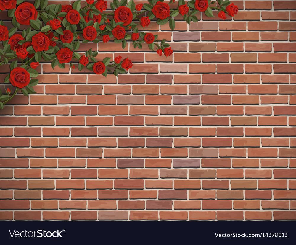 Climbing rose on a brick