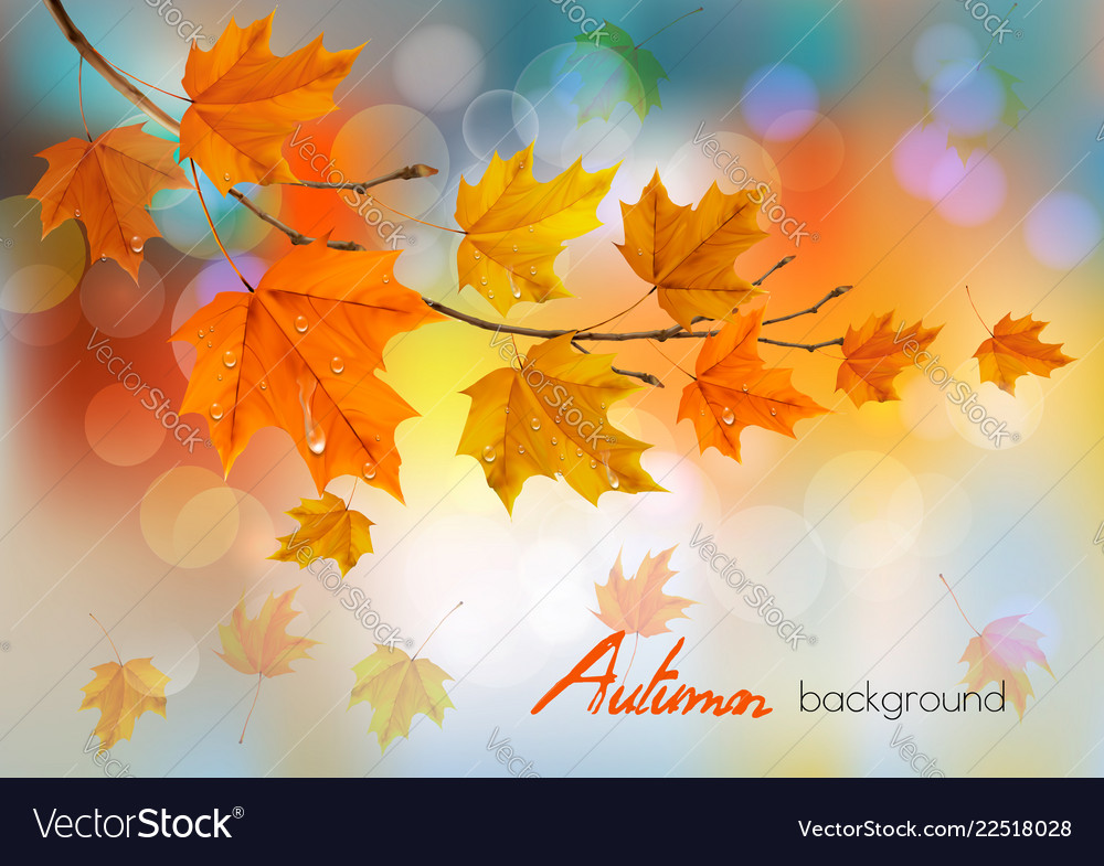 Autumn Nature Background With Colorful Leaves And