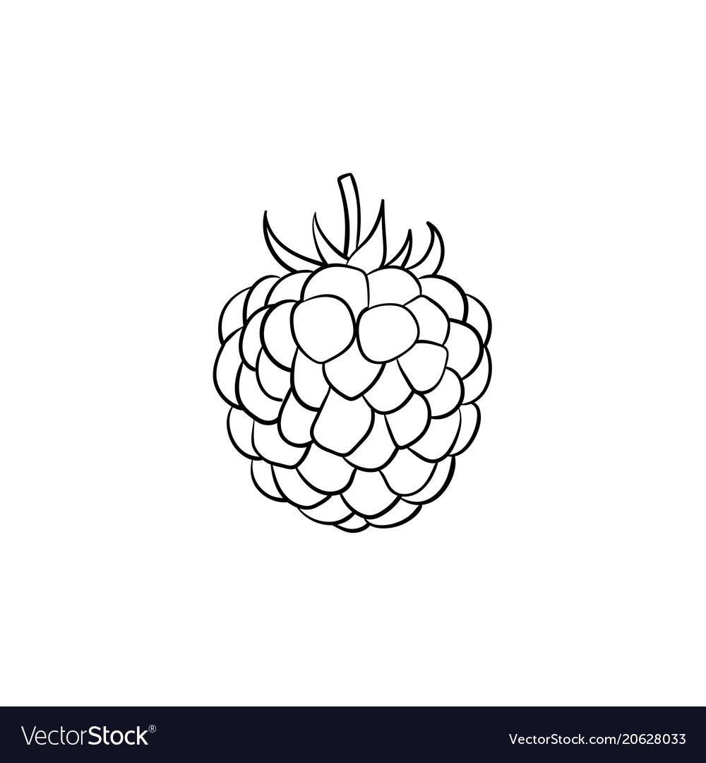 Blackberry hand drawn sketch icon