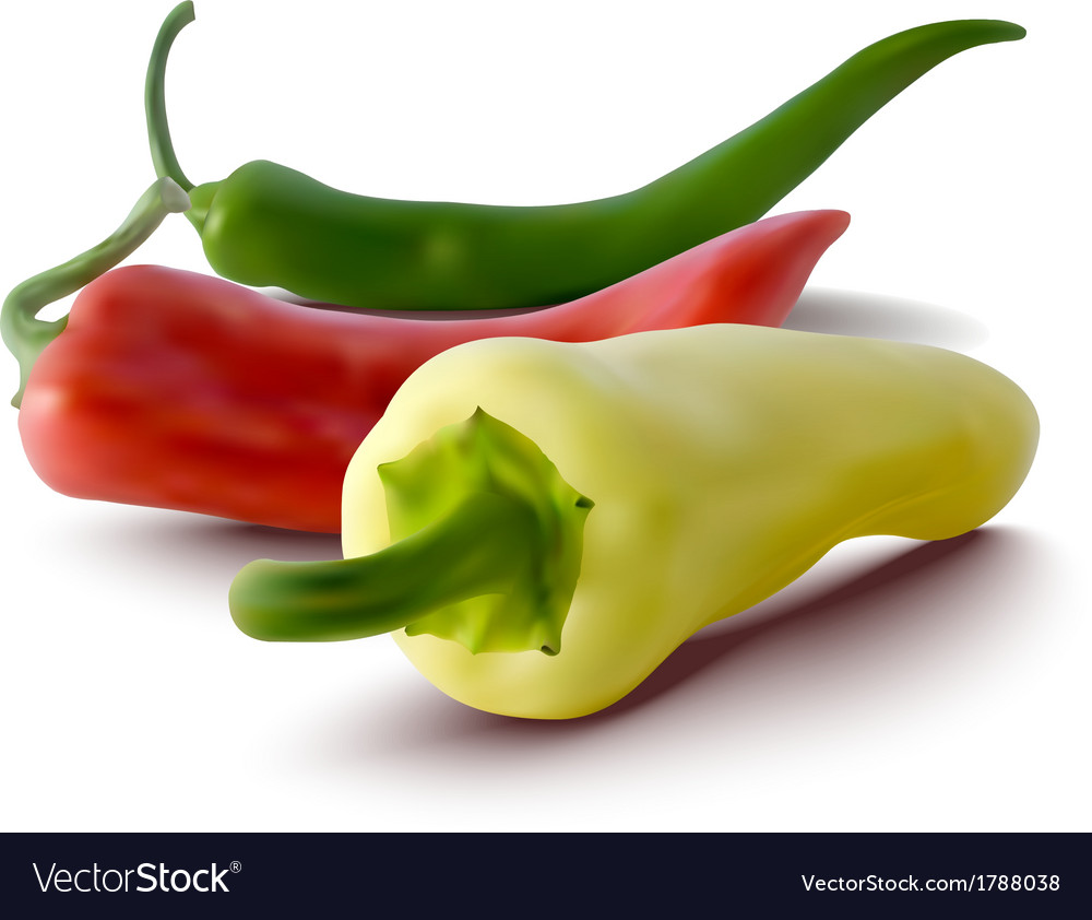 1a0fe792e37a Red green and yellow peppers vector image