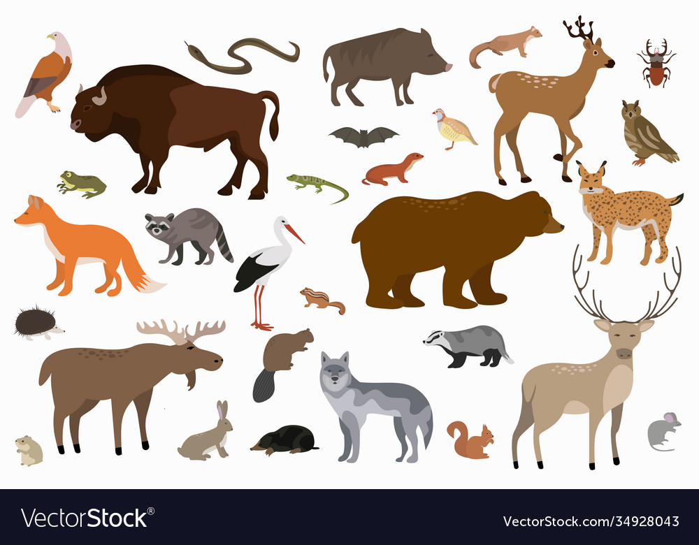 Collection cartoon forest animals and
