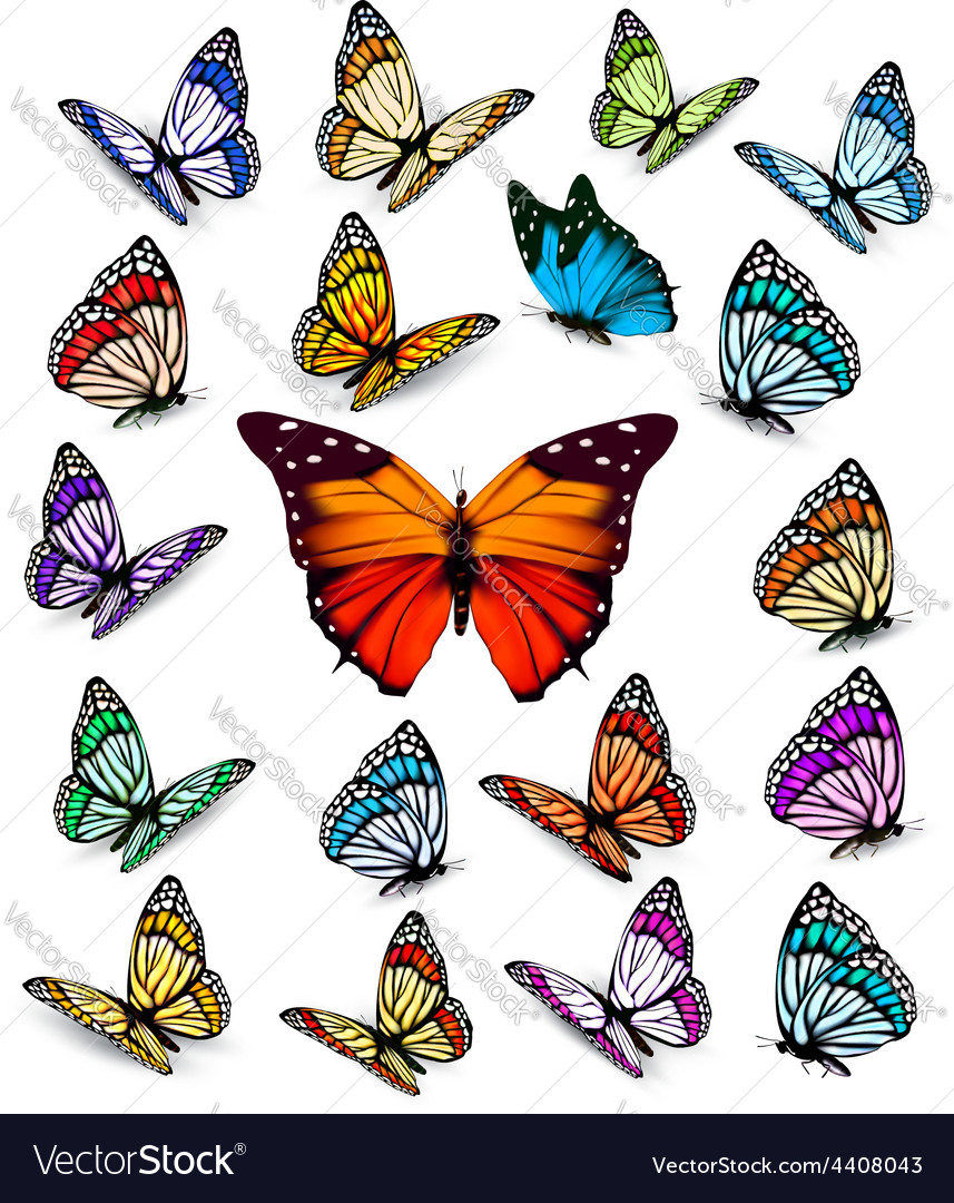 Set of different colorful butterflies