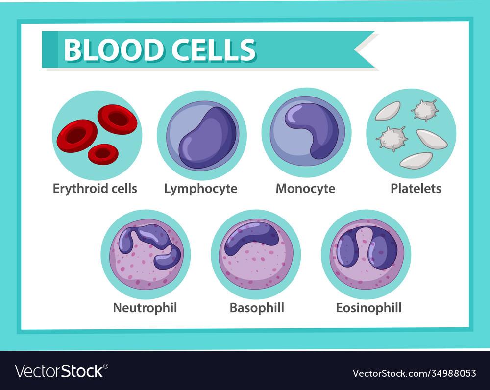 Type blood cells
