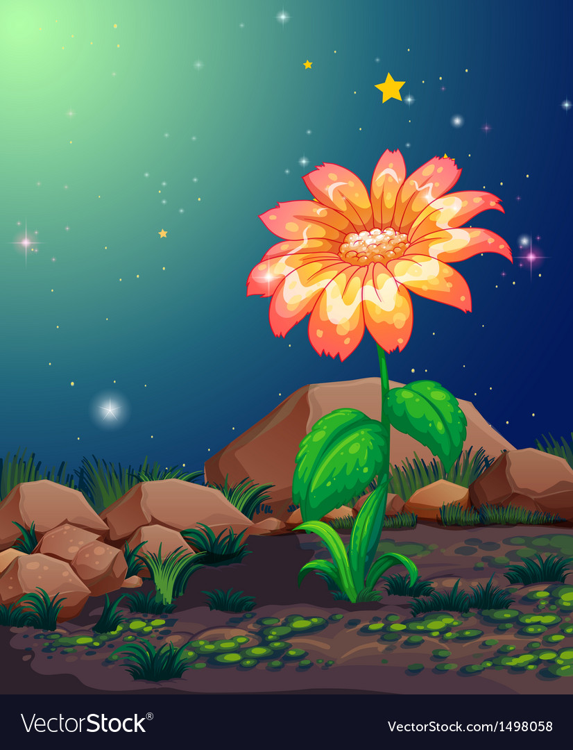 A Beautiful Blooming Flower Royalty Free Vector Image