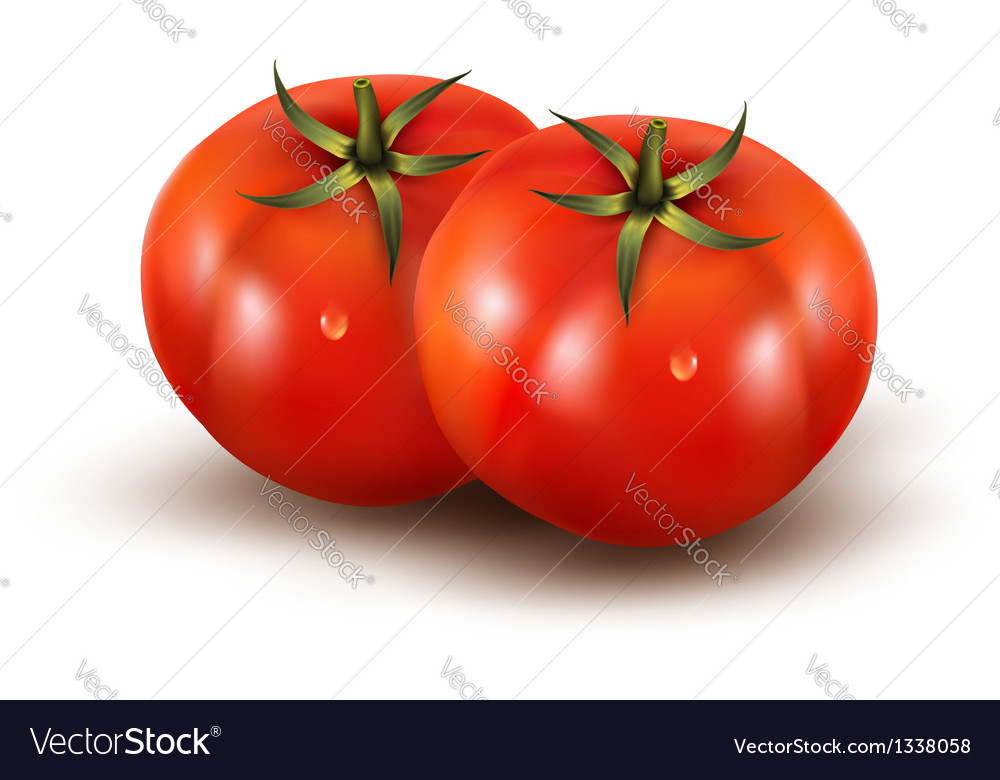Tomatoes isolated on on white background