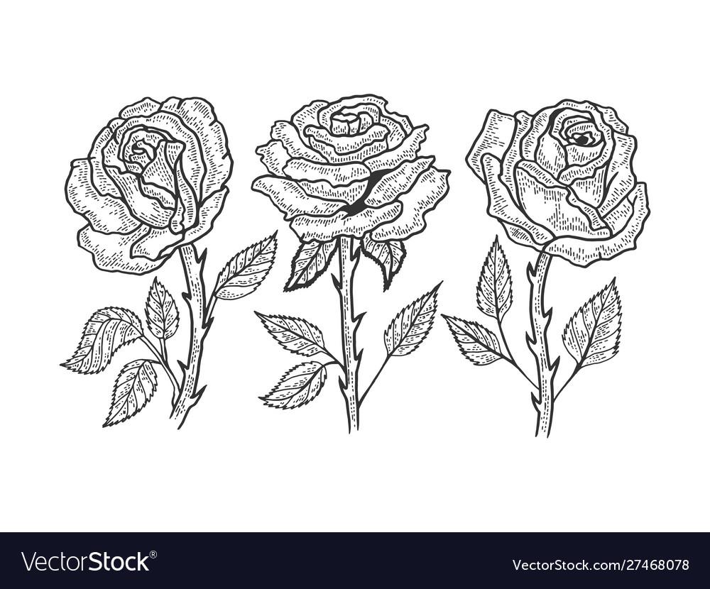 Rose flower sketch engraving