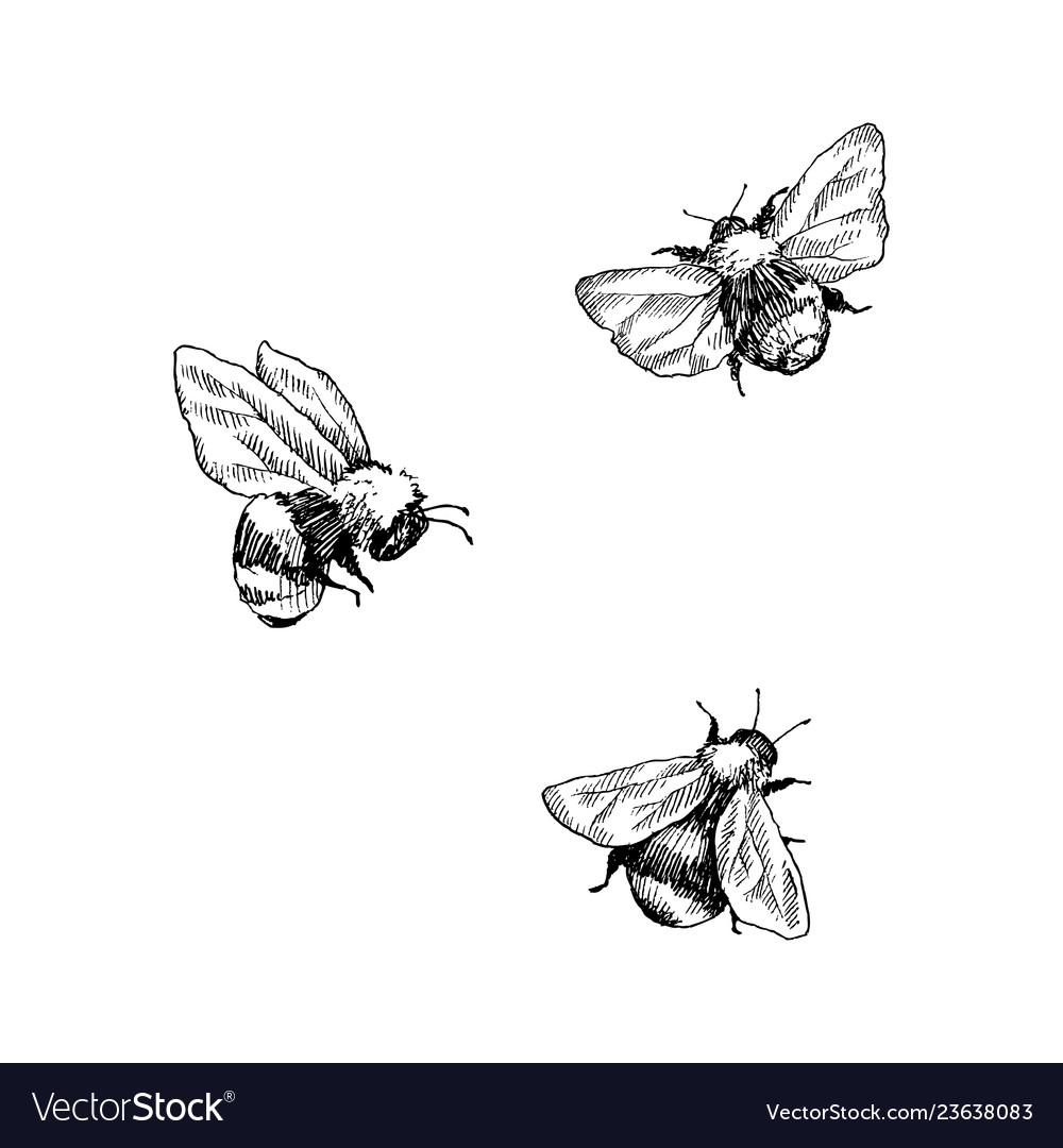 Bumblebee set hand drawn