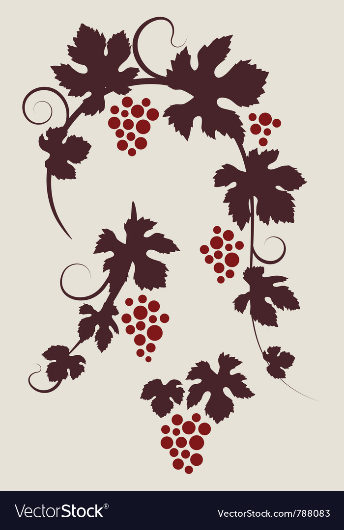 Grape vines silhouettes set vector